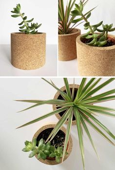 Modern round tabletop cork planters for cacti and succulents.