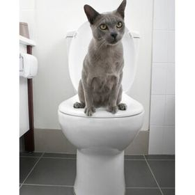Litter Kwitter Cat Toilet Training System Wayfair In 2020 Cat Toilet Training Cat Toilet Toilet Training
