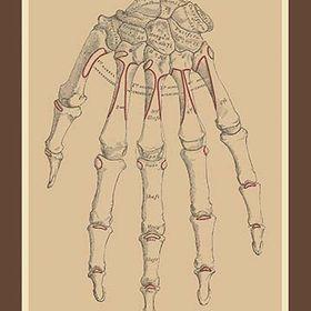 Bones Of The Upper Row Art Print 9785871189467 Anatomy Buyenlarge Medical New Art Prints Art Vintage Art
