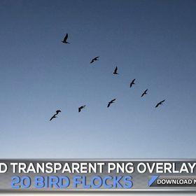 20 Transparent Png Bird Flock Overlays Flying Birds Flock Photo