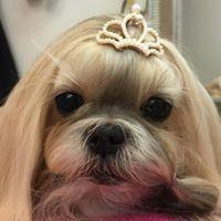 Hundfrisören Jennys