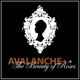 Avalanche+® Roses
