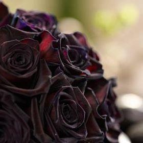 Black Baccara Designs