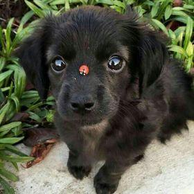 Puppy Noir