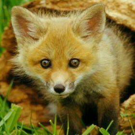 L. Fox