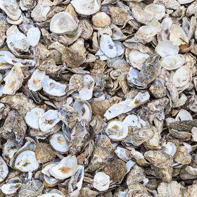 Shellscapes