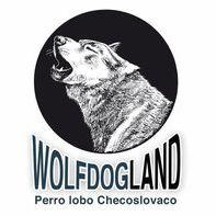 Wolfdogland Perro Lobo Checoslovaco