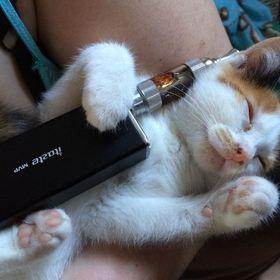 Коте Под Наркоте