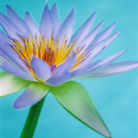 Kaiapoi Florist
