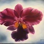 Diana Monet