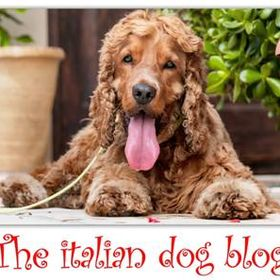 theitaliandogblog