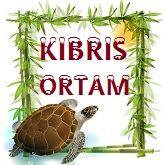KIBRIS ORTAM