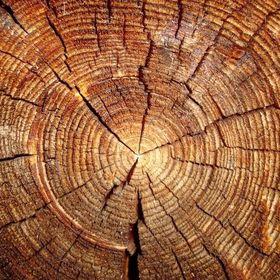 drewno odNOWA