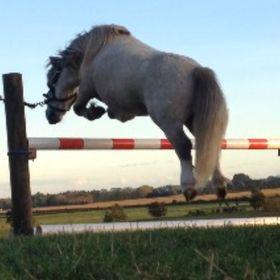 horse lover 101