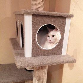 Cool cat furniture
