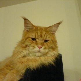 Cat Amunett