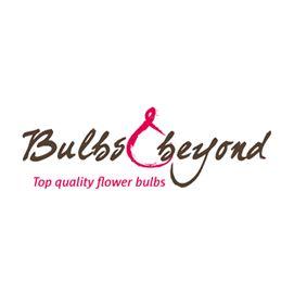 Bulbs & beyond