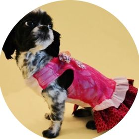 Fetch Dog Fashions
