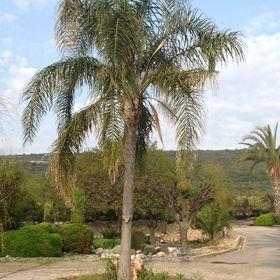 Uzbas Arboretum