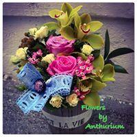 Floraria Anthurium