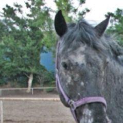 Horse Ananas