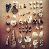 Seashell Supply