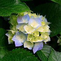 45 cm Maceta de Flor de Pascua Multicolor WeRChristmas