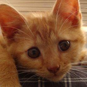 Peppertje Ginger