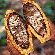 El Templo del Kakao