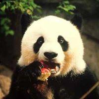 Lili Panda