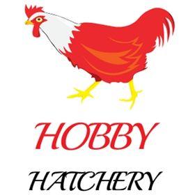 Hobby Hatchery