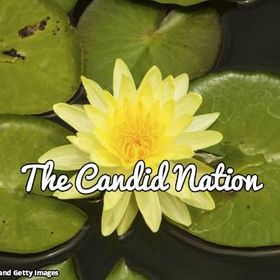 The Candid Nation