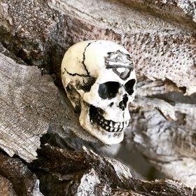 skulls for road