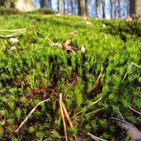 Waldspielgruppen