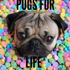 Pugs for life