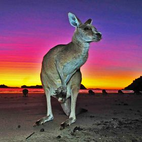Travel and Wildlife Photography | Ray & Sue