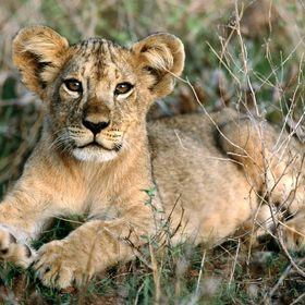 Lionnita Etc.