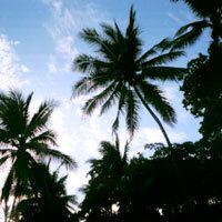 The International Ecotourism Society