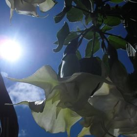floral mckay