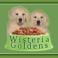 Wisteria Goldens