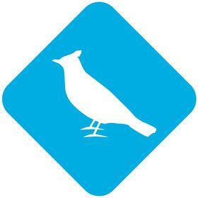 Bluebirds & Co.