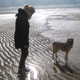 Hundeblog & Reiseblog - Steffis Schreibsicht