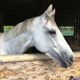 Horsey Hannah V2