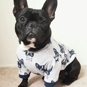 Lola Dog Fashion
