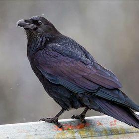 RavenBoy