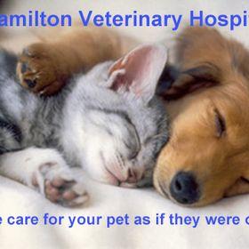 Hamilton Veterinary Hospital