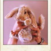 8df4594e5341 Carole B Pandora (carolebpan) on Pinterest