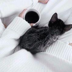 blackcat :)