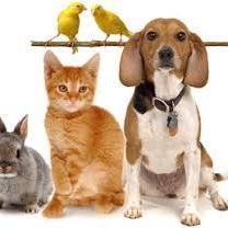 Pets Garage