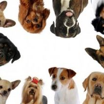 DogBreeds from the World